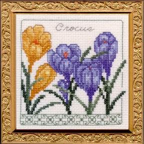 crocus_original.jpg